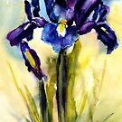 Iris by Shirlroma