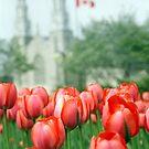 Ottawa Tulips Fes. by heyhodesign