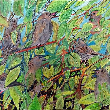 431 - SPARROWS (A) - DAVE EDWARDS - COLOURED PENCILS - 2018 by BLYTHART