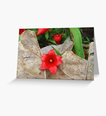 """""""Flame tree Flower"""" Greeting Card"""