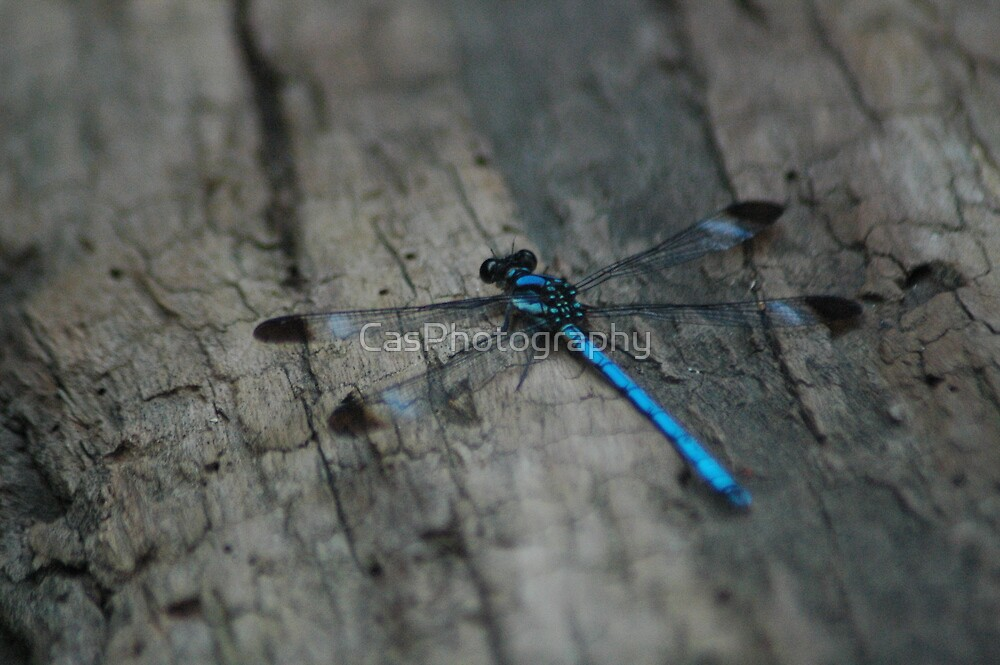 """(6/13) """"Flat Blue"""" by CasPhotography"""