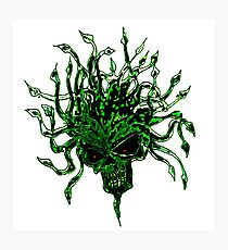 herbaceous head Photographic Print