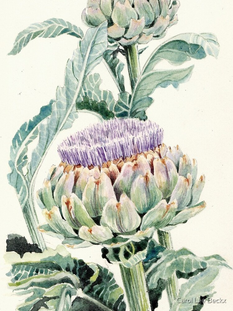 Artichokes  by Carol-Lee-Beckx
