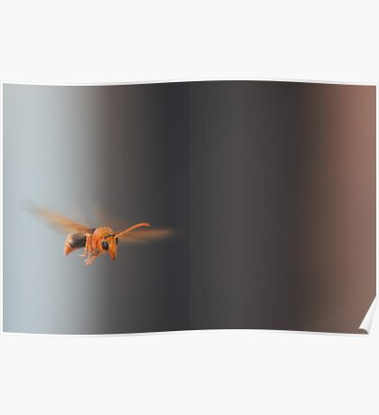 wasp in flight Poster