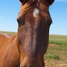 """I walked in to the bar and the barman asked, """"Why the long face?"""" by Paul Thompson"""