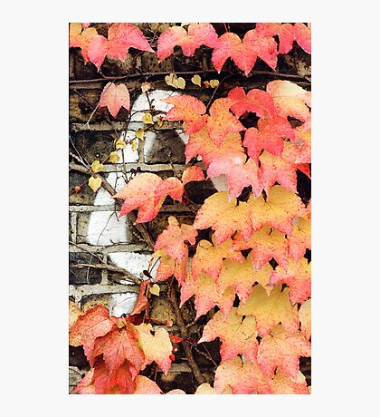 an impression of autumn Photographic Print