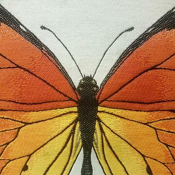 Butterfly  by heroismo1963