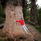 """Tree Hugger"" Walpole, South Western Australia by wildimagenation"