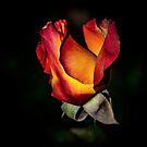 Fire Rose Bud by Len Bomba