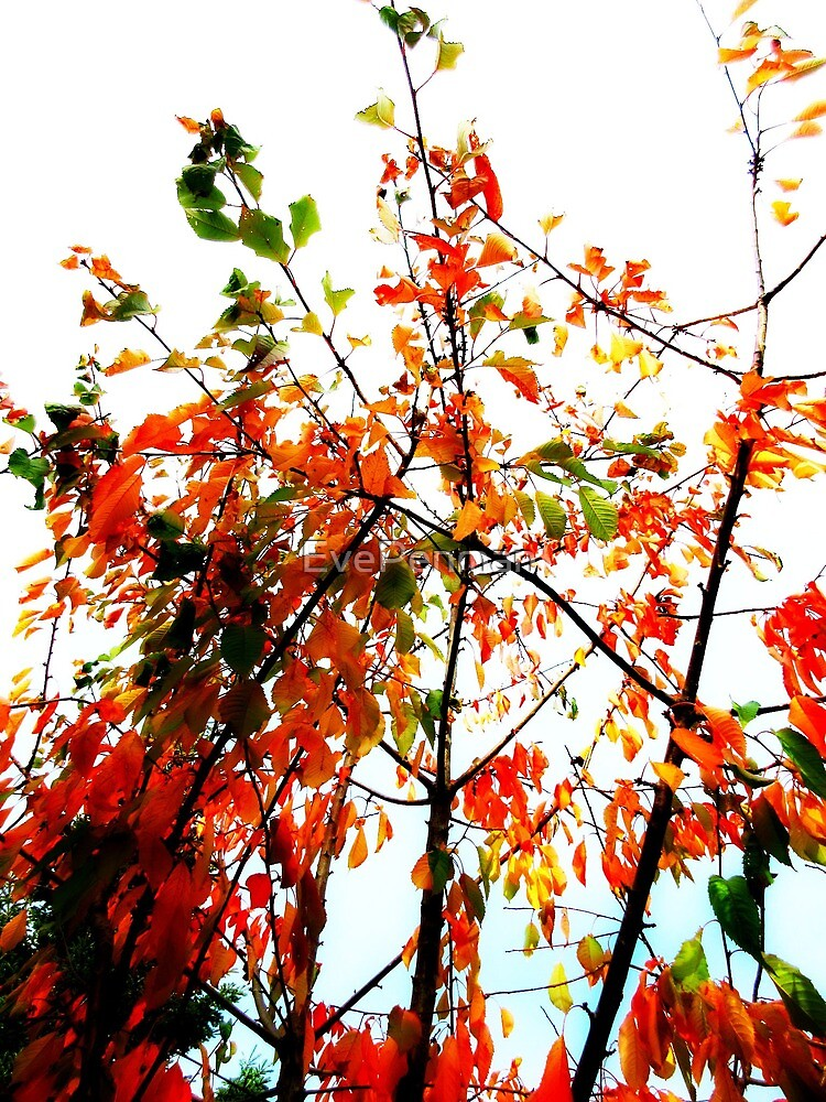 October Branches by EvePenman