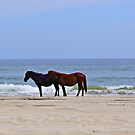 Spanish Wild Horses by Picture-It