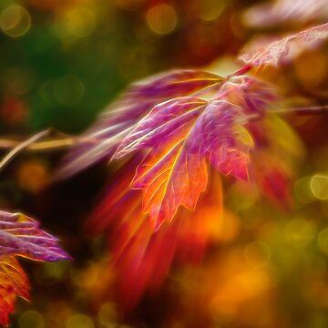 Autumn's Glow 4 by wekegene