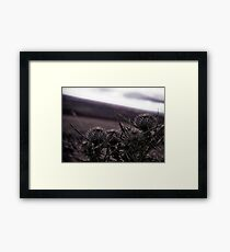 Thistles in The Peak District Framed Print