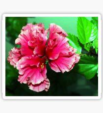 Deep pink double hibiscus Sticker
