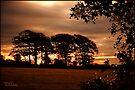 Dawn Light East Sussex: England UK by DonDavisUK