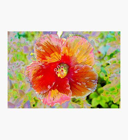 Rosy peach hibiscus Photographic Print