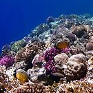 Beautiful And Colorful Red Sea Sealife by hurmerinta