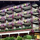 Pretty Window Boxes in Austria by Sue Gurney