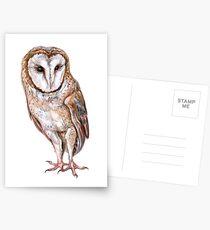 Barn owl drawing Postcards