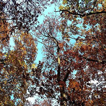 Autumn leaves under the blue sky by SooperYela