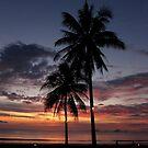 Stunning Sunset Palm Trees by vonb
