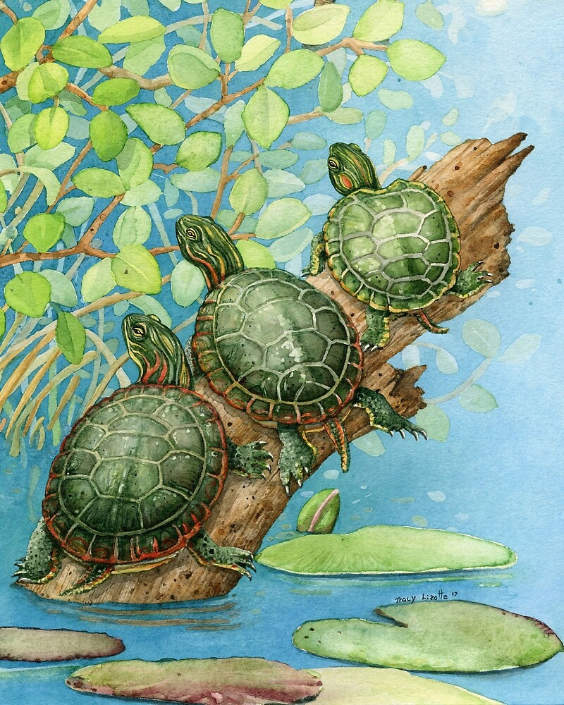 Painted Turtles by Tracy Lizotte