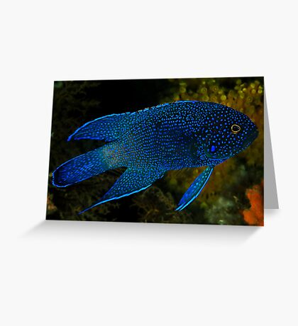 Southern Blue Devil Greeting Card