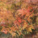 Autumn impressions by Judi Lion
