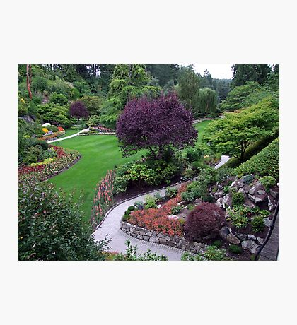 Sunken Garden(5) Photographic Print