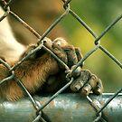 Let me out please 2..... by Susanne Correa