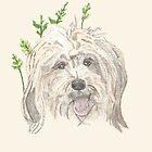 Tibetan Terrier - Meg by Shani Burgess