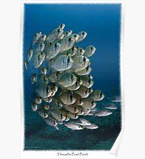 Threadfin Pearl Perch (Calendar Version) Poster