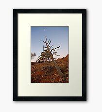 Old tree at Mutawintji Framed Print