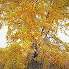 Old Milton Meadow Autumn Splendor by JOSEPHMAZZUCCO
