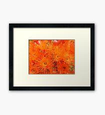 Orange Gums-(Floral Macro) Framed Print
