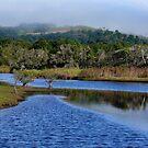 Blue Tallow Creek  by byronbackyard