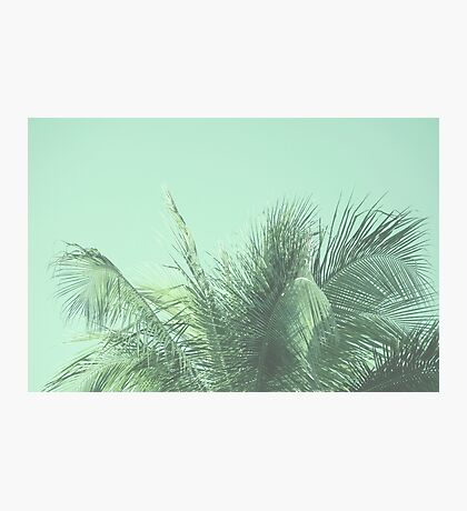 Green Tropical Palm Photo Photographic Print