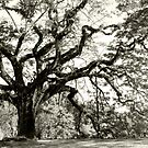 Shine, raintree, shine!! by T.O. Ang