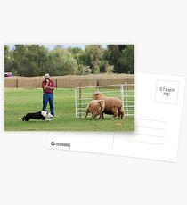 Kite Postcards