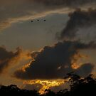 Tamarindo, Costa Rica - Ibis flying by citrineblue