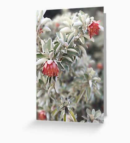 Silver Leaf Greeting Card