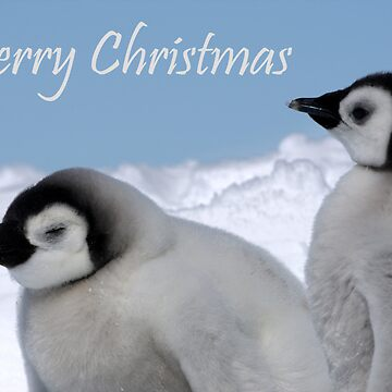 Emperor Penguins 6 - Merry Christmas Card by SteveBulford