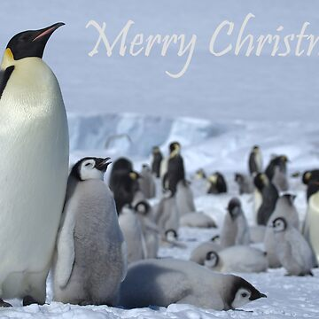 Emperor Penguins 7 - Merry Christmas Card by SteveBulford