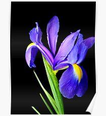 Single flower. Poster
