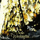 Washington Wood by EvePenman