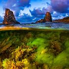Split Level Colorful Algae And Sunset by davinci-blue