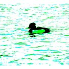 Colourful tufted duck by derbyshireduck