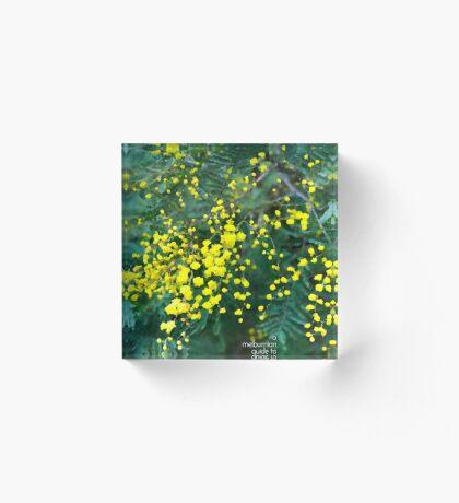 Wattle Fever Acrylic Block