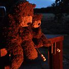 Deano Bears Toasting Marsh Mallows by Dean Harkness