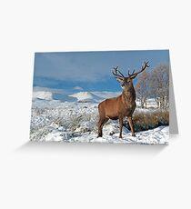 Deer-Stag Greeting Card